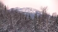 Zima - ośnieżone drzewa