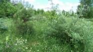 Ul w zielonym ogrodzie