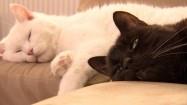 Koty wylegujące się na kanapie