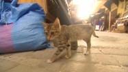 Kotek na uliczce w Fezie