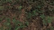 Suche liście w lesie