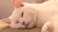 Leniuchujący kot