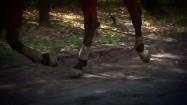 Kłus konia