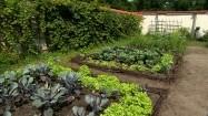 Warzywa w ogródku