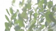 Zielone gałęzie