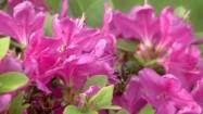 Pszczoła wśród kwiatów