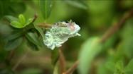 Zielona gąsienica na gałęzi