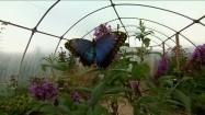 Motyl na różowym kwiatku