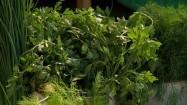 Warzywa i zioła na straganie