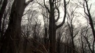 Drzewo powalone przez wiatr