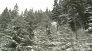 Drzewa iglaste pokryte śniegiem