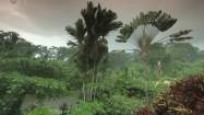 Bujna roślinność Kostaryki