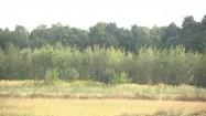 Łąka i las