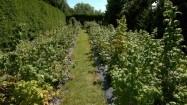Krzewy owocowe w ogródku