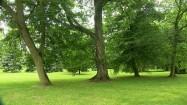 Drzewa w nieborowskim ogrodzie