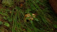 Grzyb między źdźbłami trawy