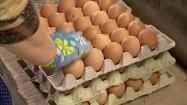 Kobieta układająca wytłoczki z jajkami