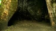 Stary platan - wnętrze pnia