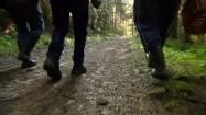 Grzybiarze w lesie