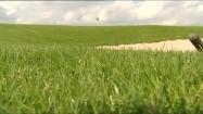 Trawa na polu golfowym
