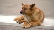 Pies leżący na chodniku
