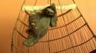 Drapiący się leniwiec