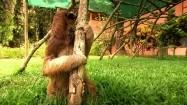 Leniwce na Kostaryce