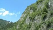Drzewa w górach