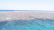 Rafa koralowa na Morzu Czerwonym