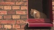 Rudy kot w oknie