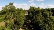 Aleja lipowa w nieborowskim ogrodzie