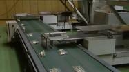 Jednogroszówki w workach na taśmociągu