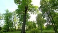 Drzewa w parku