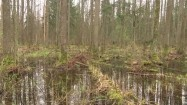 Puszcza Białowieska - tereny podmokłe