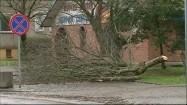 Skutki wichury - połamane drzewa