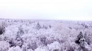 Ośnieżone korony drzew zimą