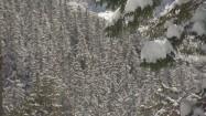 Świerki na górskim zboczu