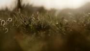 Polne rośliny