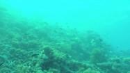 Rafa koralowa na Oceanie Indyjskim