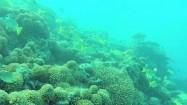 Ławica ryb na rafie koralowej