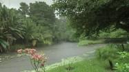 Bujna roślinność Kostaryki w deszczu