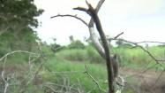 Gałęzie i zielone pole