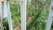 Szklarnia w ogrodzie