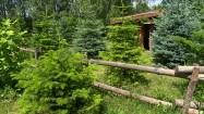 Sauna wśród drzew