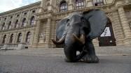 Rzeźba słonia przed Muzeum Historii Naturalnej w Wiedniu