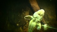 Jesiotr w akwarium