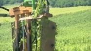 Maszyna do przycinania winorośli