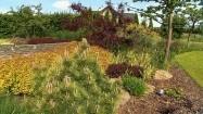 Ogród z kosodrzewiną