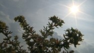 Słoneczny dzień