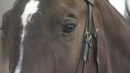 Oczy konia